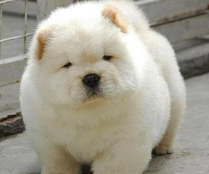 animal, cutie, and puppy image