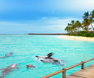 beach, dolphin, and summer image