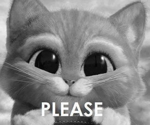 cat, please, and cute image
