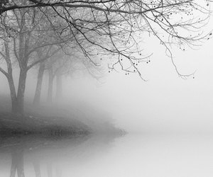 black and white, nature, and tree image