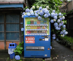 japan, flowers, and aesthetic image