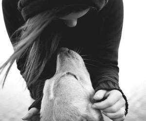 black and white, pet, and cute image