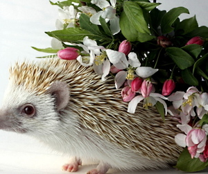 animals, flowers, and hedgehogs image