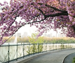 flowers, Central Park, and park image