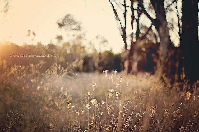 nature, beautiful, and tree image