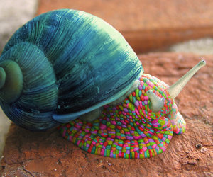 snail, animal, and blue image