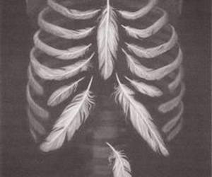 feather, ribs, and protect your heart image
