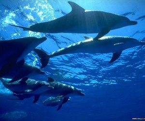 blue and dolphin image