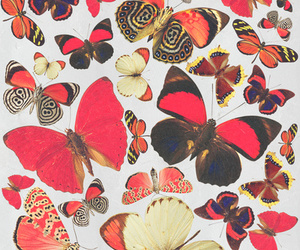 background and butterflies image