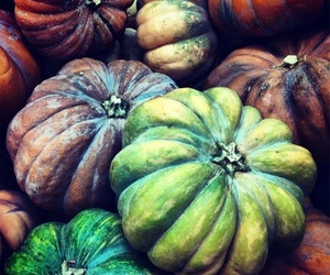 colors and pumpkins image