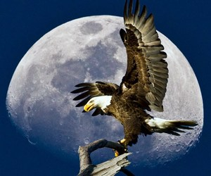 branch, eagle, and moon image