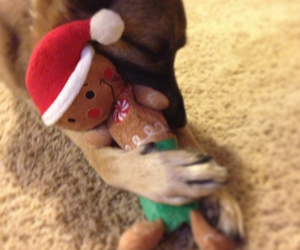christmas, cuddle, and puppy image