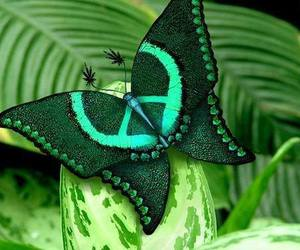 butterfly, green, and peace image
