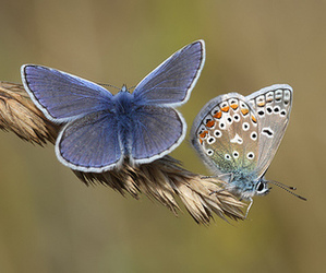 beautiful, photography, and butterflies image