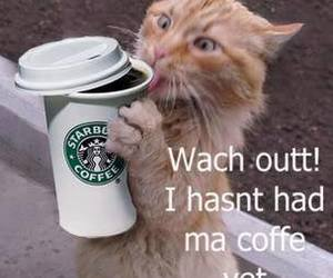 cats and coffee image