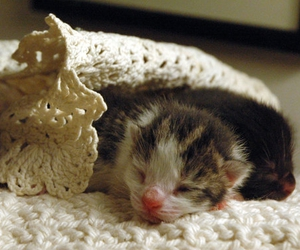 kittens, sleeping, and cute overload image