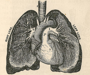 lungs and heart image