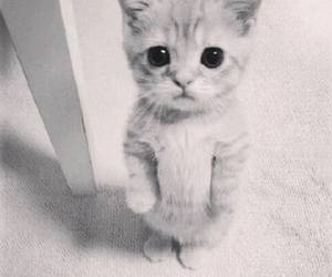 animal, black and white, and sweet image