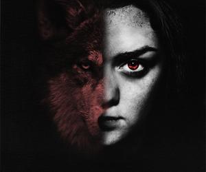 game of thrones, wolf, and arya stark image