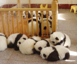 panda, cute, and animal image