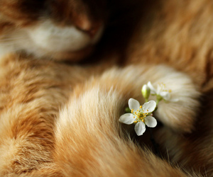 animals and cats image