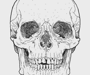 skull, pink, and transparent image