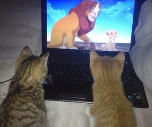 beautiful, cats, and cute image