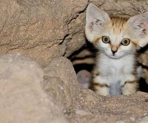 cats, cute animals, and kitty image