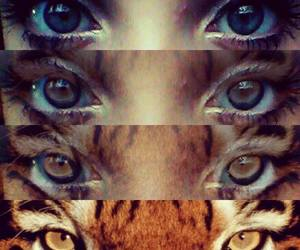 cool, eyes, and tiger image