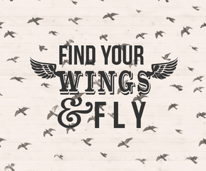 wings, fly, and find image