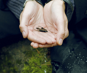 boy, fish, and hands image