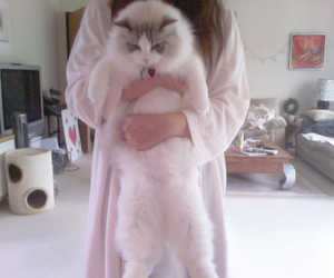 cat, pink, and pale image