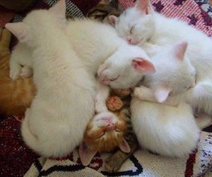 cats, lovely, and bbaby cat image
