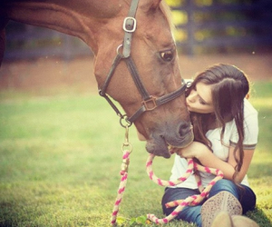 horse and kiss image