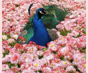flowers and peacock image