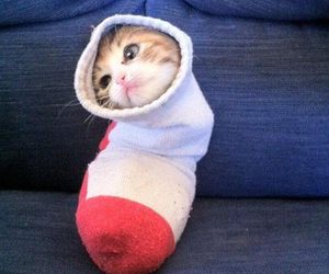cat, cute, and socks image
