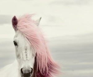 awesome, cheval, and white image