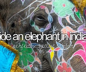 elephant, india, and before i die image