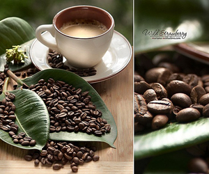 bean, coffee, and cup image