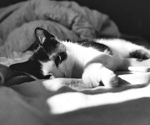 cat, animal, and sleep image