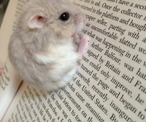 cute, animal, and book image