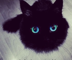 awesome, black, and cat image