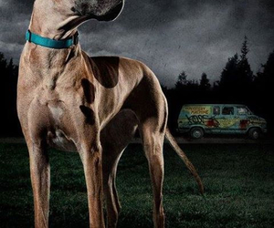 great dane, scooby doo real, and dogs giants image