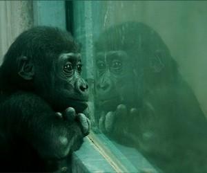 cute, animal, and monkey image