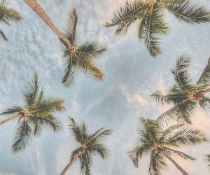 beach, header, and palms image
