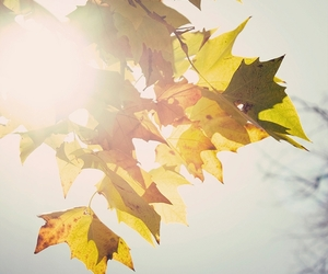 autumn, leavs, and nature image
