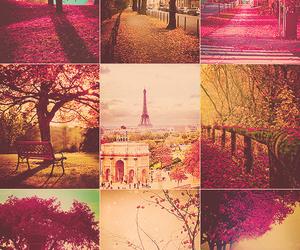 paris, pink, and autumn image