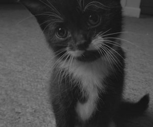 blackand white, tumblr, and cat image