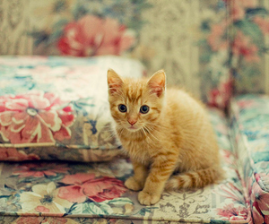 kitten and sofa image