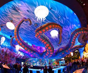 restaurant and squid image